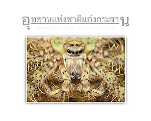 Kaeng Krachan National Park Spider