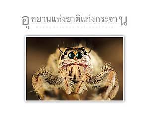 Kaeng Krachan National Park Salticidae